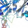 Estructura, plegamiento y función de proteínas