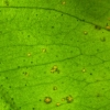 Functional Genomics Plant-Pathogen