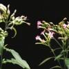 Biología del Estrés en Plantas