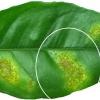Molecular Genetics and Functional Genomics of Plant-Microorganism Interactions