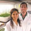 De bacterias a cloroplastos