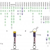 Efficiency and precision of microRNA biogenesis modes in plants