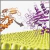 Arabidopsis thaliana Hcc1 is a Sco-like metallochaperone for CuA assembly in Cytochrome c Oxidase