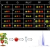 Tomato fruit quality traits and metabolite content are affected by reciprocal crosses and heterosis