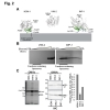 Specific protein-membrane interactions promote packaging of metallo-β-lactamases into outer membrane vesicles