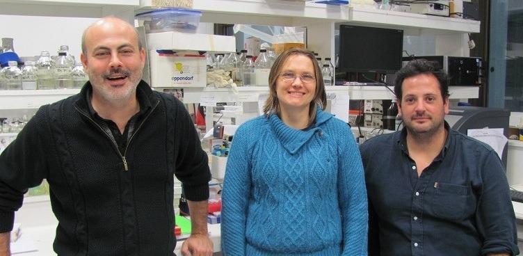 Javier Palatnik, jefe del laboratorio de Biología del ARN, Carla Schommer y Ramiro Rodriguez, autores del trabajo.