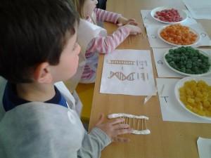 Armando ADN con golosinas